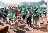 dog chow perroton 2014 inscripciones