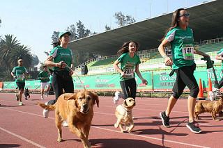 El Perrotón Dog Chow en Guadalajara y Monterrey
