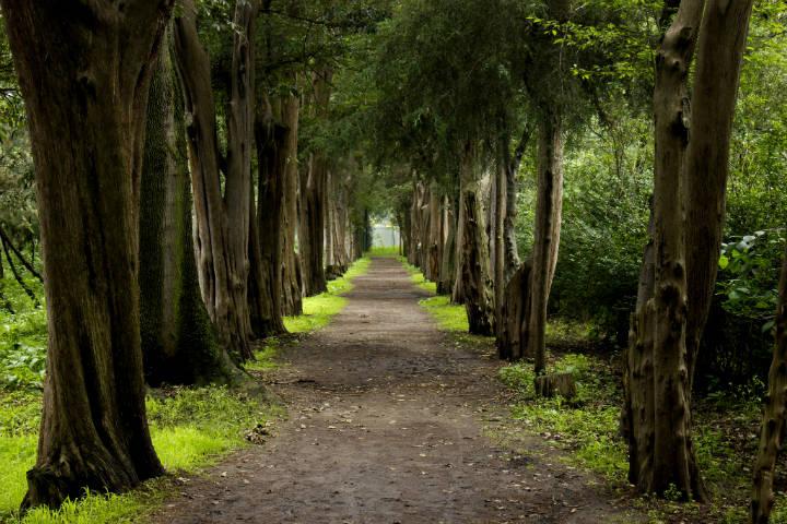 Viveros Coyoacan en donde correr